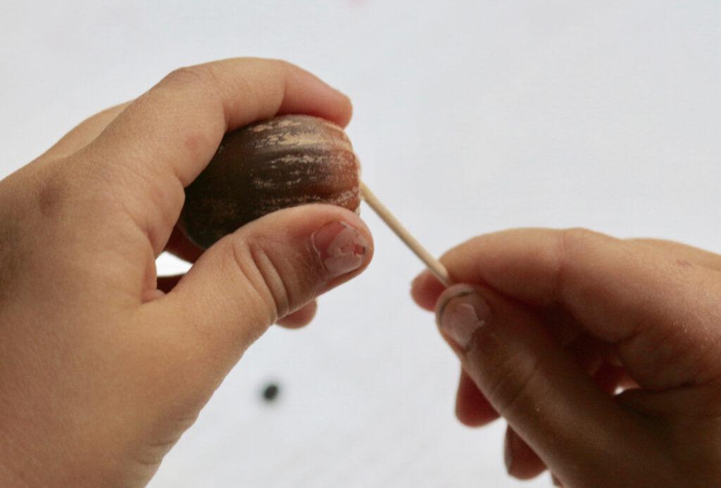 Kinderhand steckt Zahnstocher in Eichel