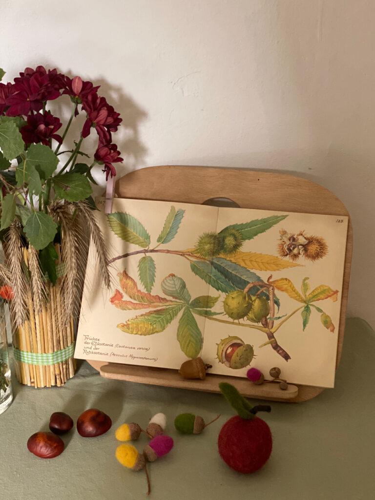 aufgeschlagenes Buch mit Kastanien-Zeichnungen, davor gefilzter Apfel und Eicheln