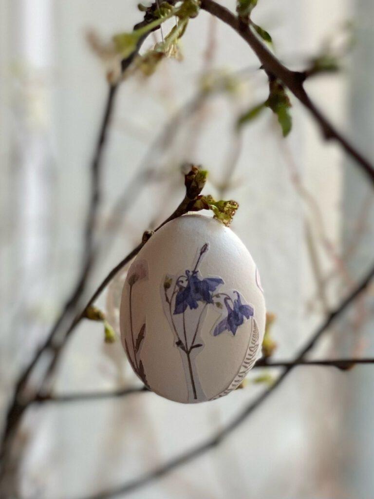 Ei mit blauer Glockenblume