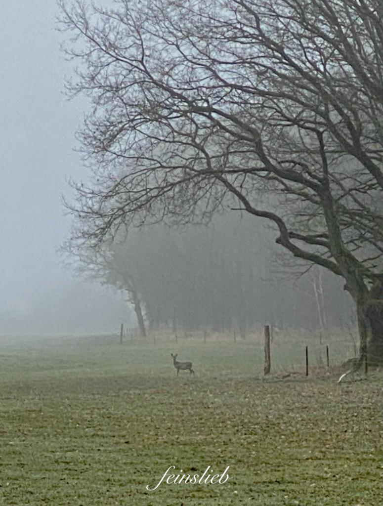 Ein Reh steht am Waldrand und blickt zum Betrachter. Einer von 11 Glücksmomente des Monats April 2021.