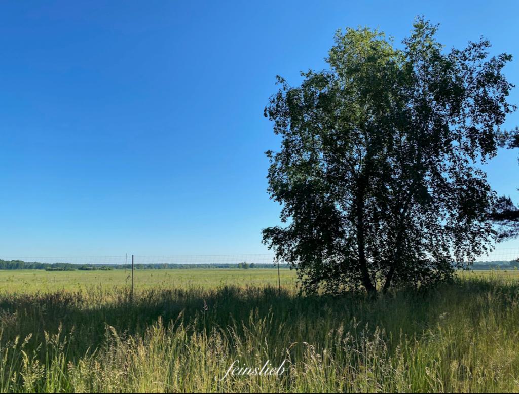 Blick auf ein weites Feld, rechts im Bild eine Birke.