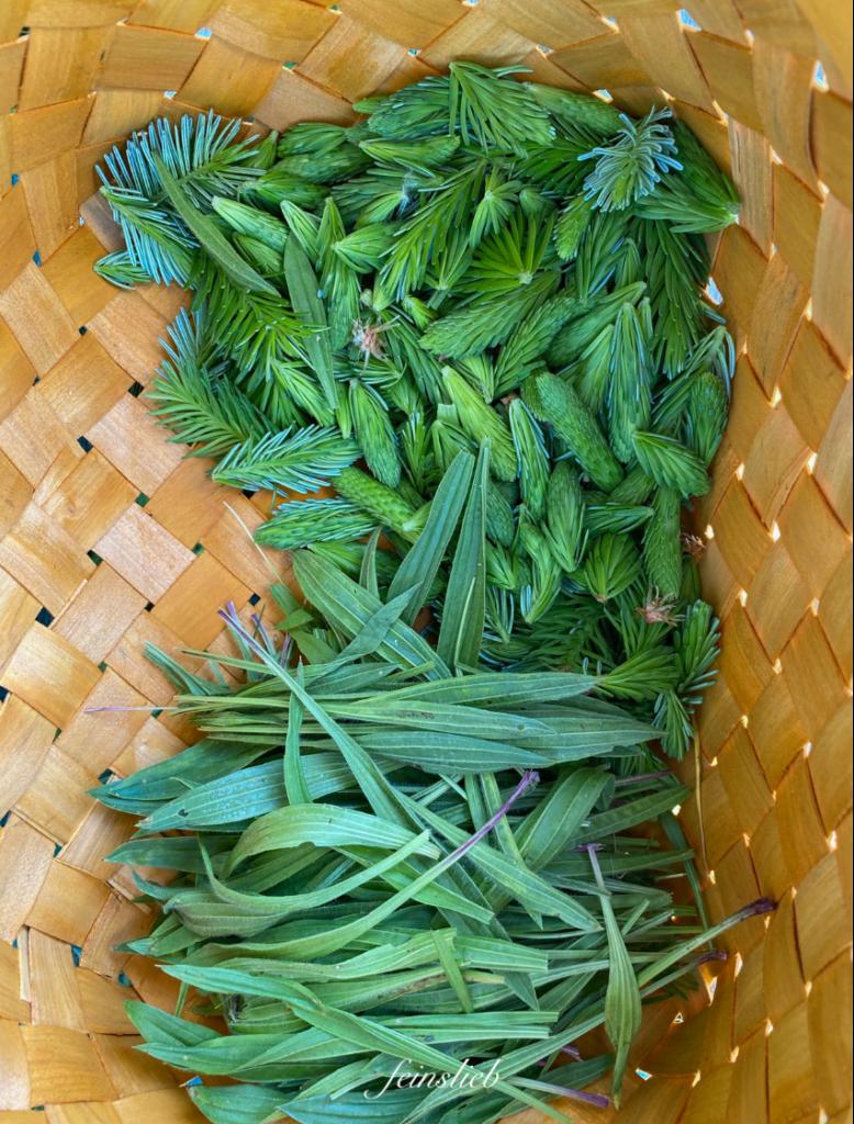 Von oben: Fichtenschößlinge und Spitzwegerich-Blätter in Sammelkorb aus Span.