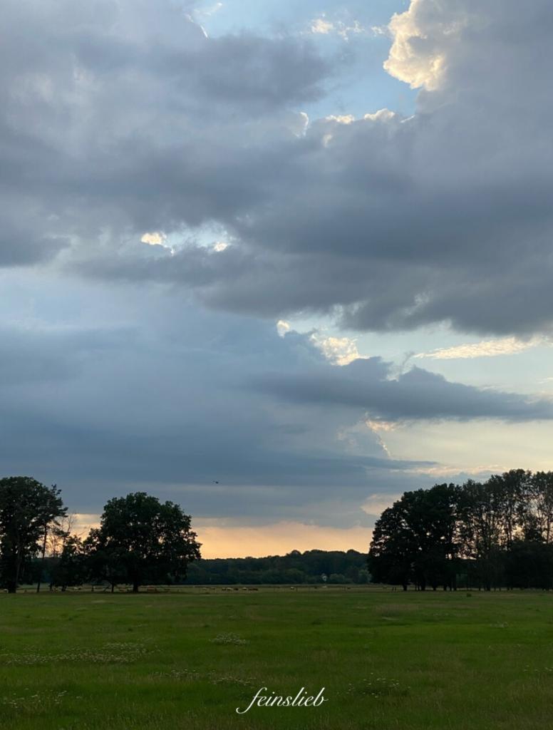 Wiese mit Bäumen vor Abendhimmel