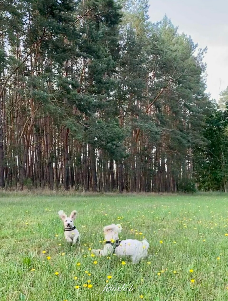 So darf ein perfekter Tag im Juli 2021 starten: Mit den Hunden auf einer grünen Wiese herumtollen.