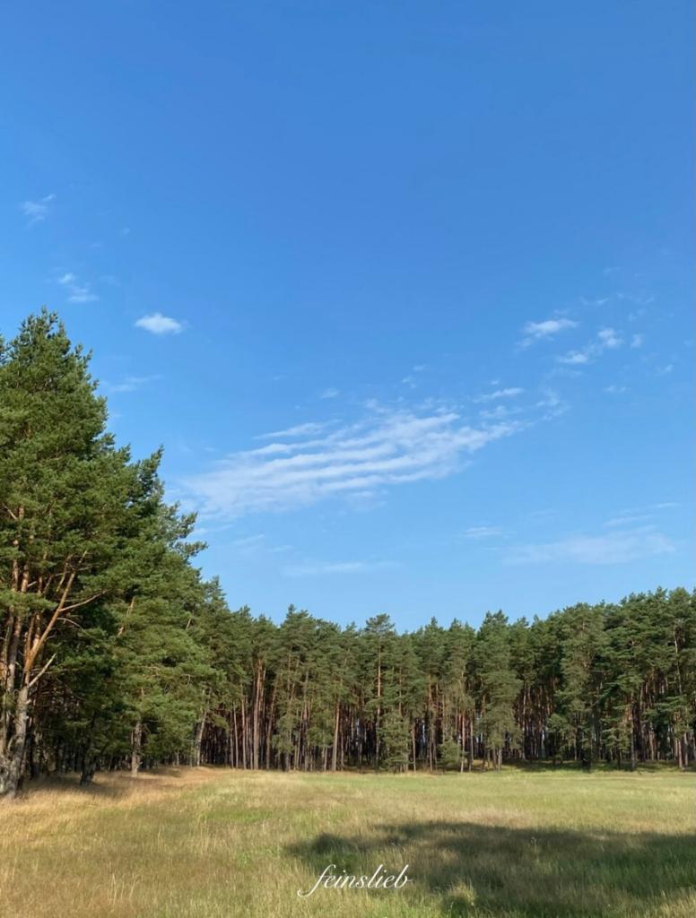 Waldrand (Kiefern) mit blauem Himmel darüber, Wetter am perfekter Tag im Juli 2021